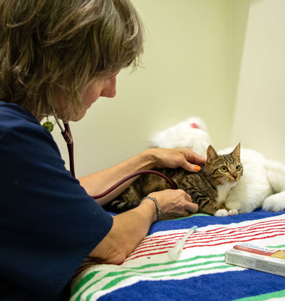 All Annual Vaccination & Pet Health Care