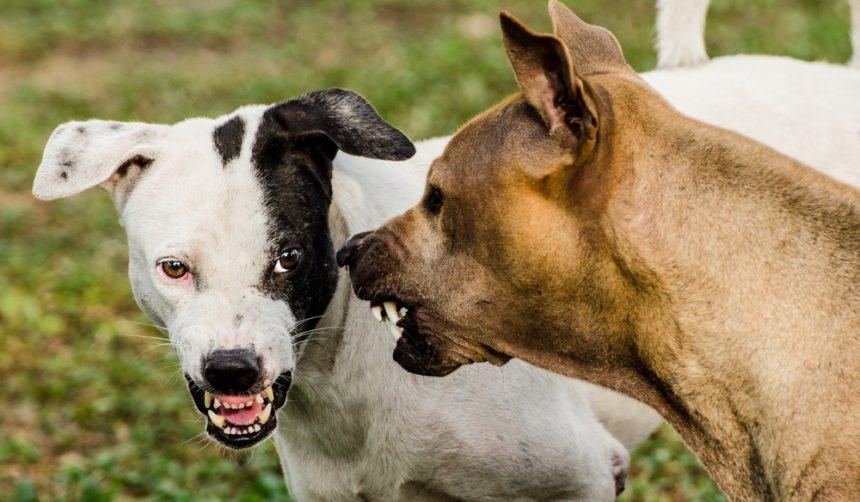 4 Behavioural Reasons Neutering Dog