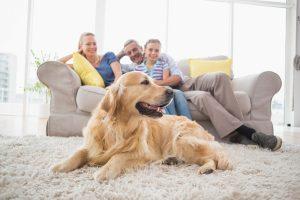 5 Most Trainable Dog Breeds Australia