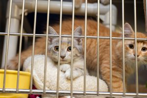 Can Rescue Cat Be Trained