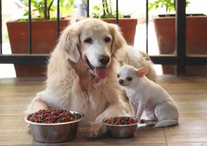 How Choose Right Dog For Kids And Family
