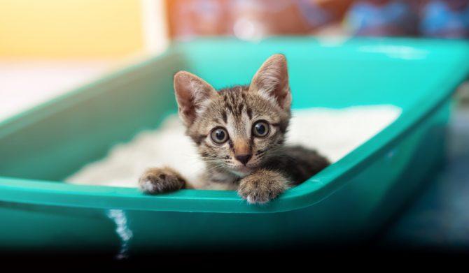 How House Train Kitten