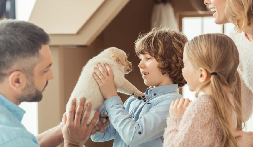 How Make Home Puppy-Friendly