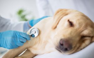 What Is Pyometra What Are Causes
